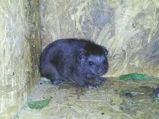 Regenwald-Baumschliefer (Foto: Jana Čížková, Archiv des Zoos Ostrava)