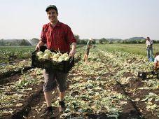 Gleaning, photo: archive of Zachraň jídlo