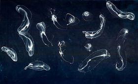 'Bubbles about Dark Blue Porn' (2009)