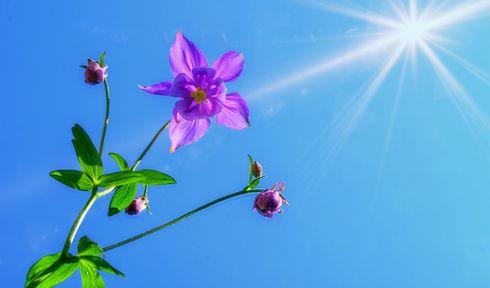 Die Sonne scheint nicht nur für eine Blume! - Pro jedno kvítí slunce nesvítí! (Foto: Bruno Glätsch, Pixabay / CC0)
