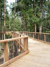 Vyhledávanou tuzemskou atrakcí je procházka vkorunách stromů uLipna, foto: archiv organizace Stezka společnosti stromů Lipno