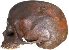 Череп «шаманки», Фото: Архив Центра культурной антропологии
