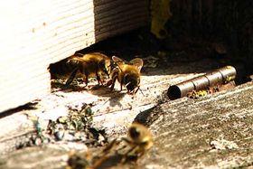 Pilný jako včelička