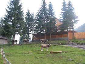 Okolí Sinevirského jezera, foto: autorka