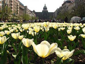 Вацлавская площадь (Фото: Кристина Макова, Чешское радио - Радио Прага)