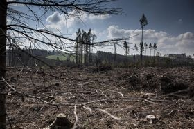 Forstkatastrophe (Foto: Jan Langer, ČT24)