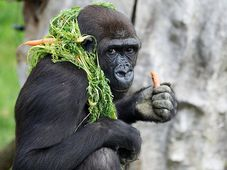 Moja, foto: Archivo del Zoo de Praga, Miroslav Bobek