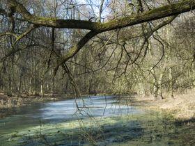 La réserve de Libický luh, photo: Prasopestilence, CC BY-SA 3.0