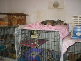 Cat shelter in Radlice, photo: Coilin O'Connor