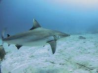 Aldabra, photo: Starlite Official Facebook page