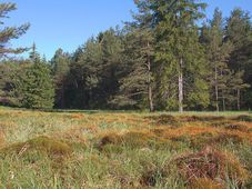 Czech Canada, photo: Atriplexmedia, CC BY-SA 3.0