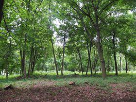 Les vzpomínek na hřbitově vpražských Ďáblicích, foto: Barbara Sendeová