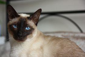 Dívající se kočka, foto: Štěpánka Budková