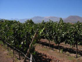 Un viñedo en Chile, foto: Ryan Greenberg, Flickr, CC BY-NC 2.0