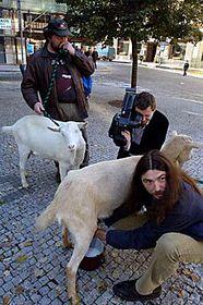 Stanislav Penc y sus cabras (Foto: CTK)