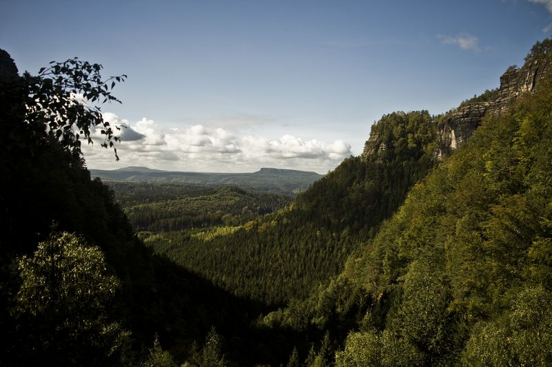 Czech landscape is rich in forests but they are ailling. Photo: Vít Pohanka, ČRo