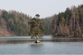 Chudobín pine, photo: Ladislav Stalmach, CC BY-SA 4.0