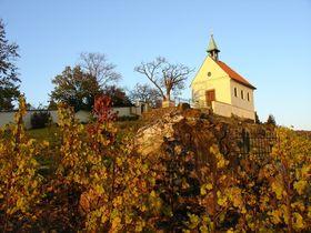 La vigne de Sainte-Claire, photo: Jardin botanique de Troja