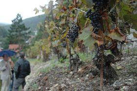 Виноградники рядом с замком, фото: Петр Клош, ЧРо