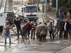 People help a hippopotamus escape from a flooded zoo in Tbilisi, Georgia, June 14, 2015, photo: CTK