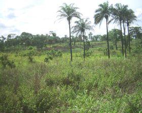 Kongo, foto: Themalau, Public Domain