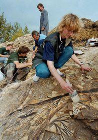 Fossile d'un lycopode (Photo: CTK)