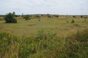 Steppenlandschaft bei Milovice (Foto: Miloslav Jirků / European Wildlife / Česká krajina)