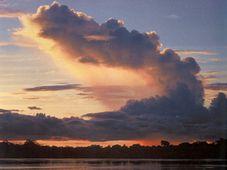 Amazonas-Ufern