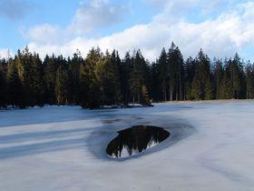Bosque de Slavkov, foto: CHKO Slavkovský lesd