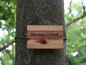 «Лес воспоминаний», Фото: Барбара Сендеова, Чешское радио - Радио Прага