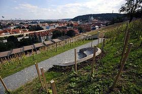 Svatováclavská vinice, foto: ČTK