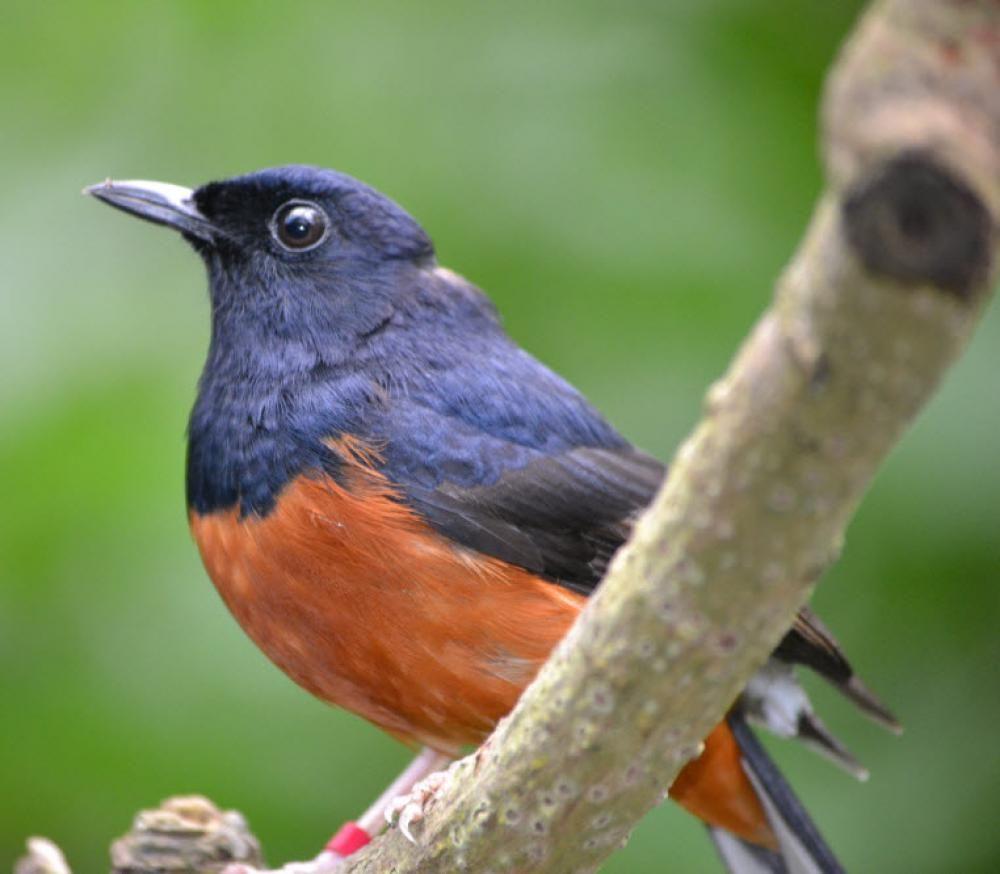 Liberec Zoo makes astronomical bird clock to help save