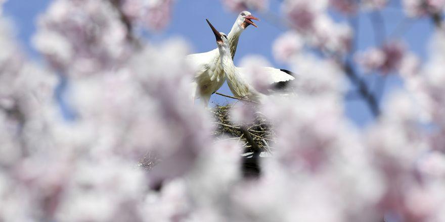 Photo: ČTK/AP/Arne Dedert