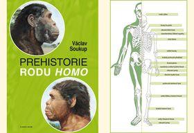 Обложка книги «Праистория рода Homo», фото: Karolinum