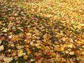 Monat des Laubabfalls - listopad (Foto: Barbora Němcová)
