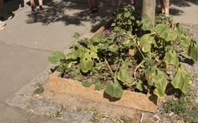 Street gardening, photo: Hunt Kastner