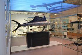 Výstava Archa Noemova, foto: archiv Národního muzea