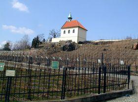 La viña de Santa Clara, foto: archivo de Radio Praga