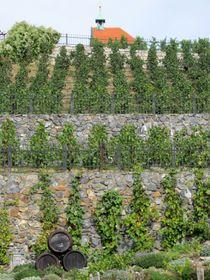 La viña de Santa Clara, foto: Ewwwa, Wikimedia Commons, CC BY-SA 3.0