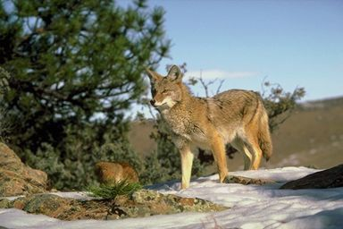 Where foxes say goodnight | Radio Prague