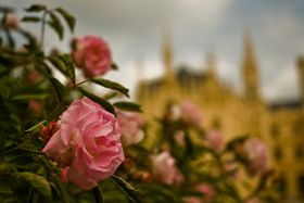 There are many rose-bushes in the park of Lednice, photo: Vít Pohanka