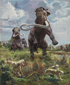 Mammuthus columbi, 1961, photo: Retro Gallery