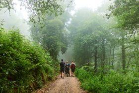 El camino boscoso, foto: archivo personal de Tomáš Lenárd