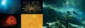 Фото: официальный сайт выставки «Подводный мир»