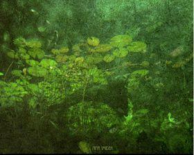'Nymphéas sous l'eau', photo: Nina Šmídek / Site officiel de Nina Šmídek