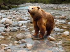 The brown bear, photo: Gellinger / Pixabay CC0