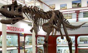 Один из экспонатов Музея истории Земли им. И.Хлупача, фото: Cropbot,CC BY-SA 3.0