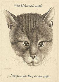 «Тот кот хорош, который не увлекается лакомствами»