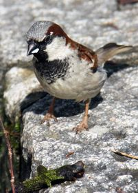 Sparrow, photo: Barbora Kmentová