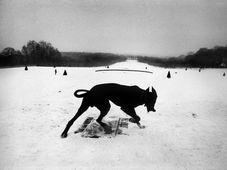 Josef Koudelka, 'France, Parc de Sceaux', 1987 © Josef Koudelka / Magnum Photos